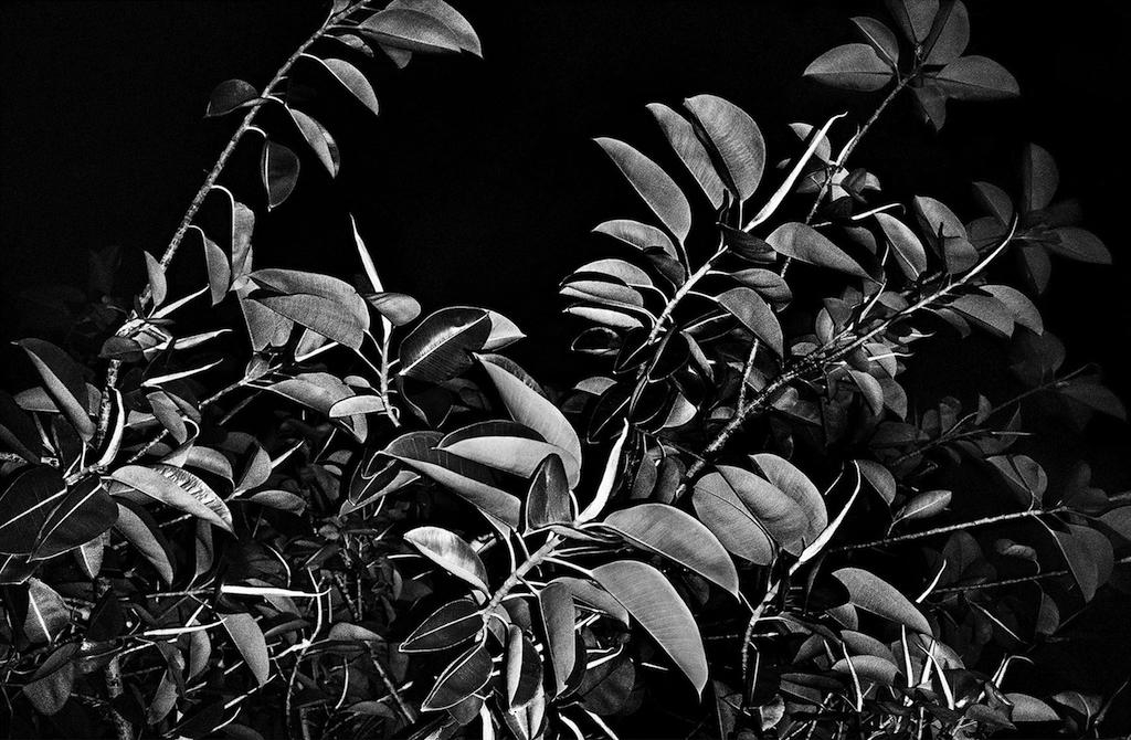 Leaves, 2010